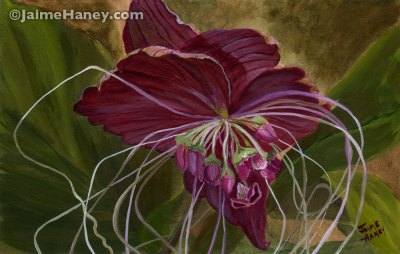 original painting of the exotic Black Bat flower