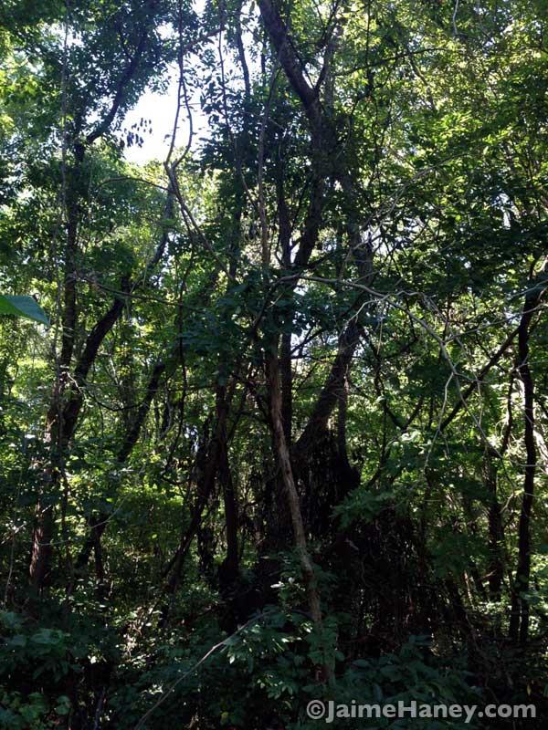peek into the woods