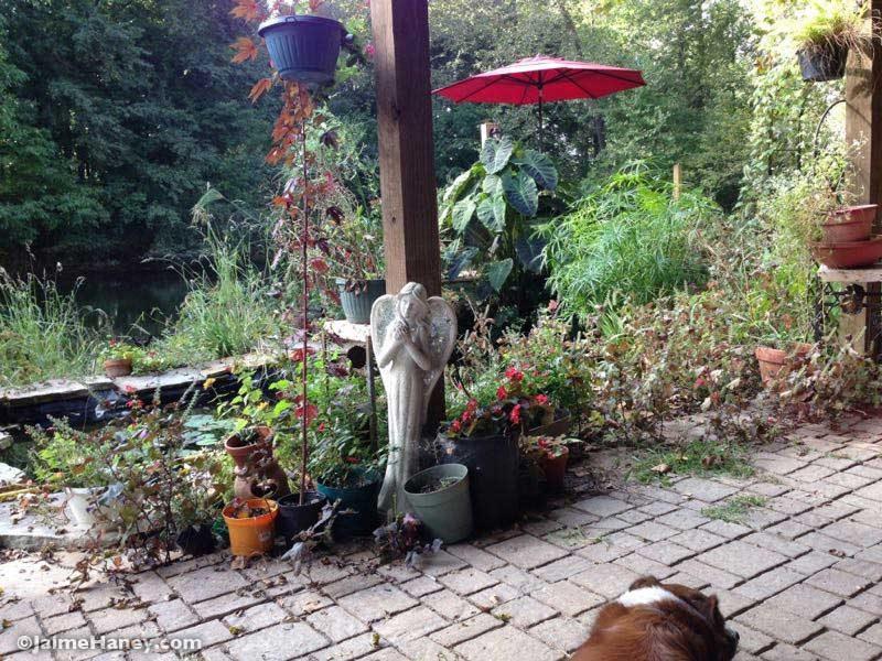 Studio Gardens in early fall.