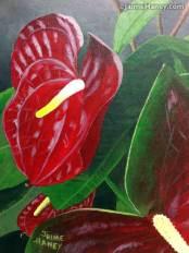 Red Anthurium flower