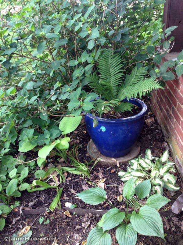 shade garden with blue glazed ceramic pot