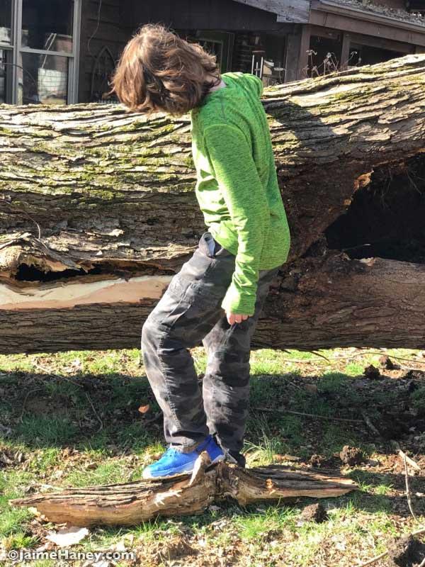 tree incident