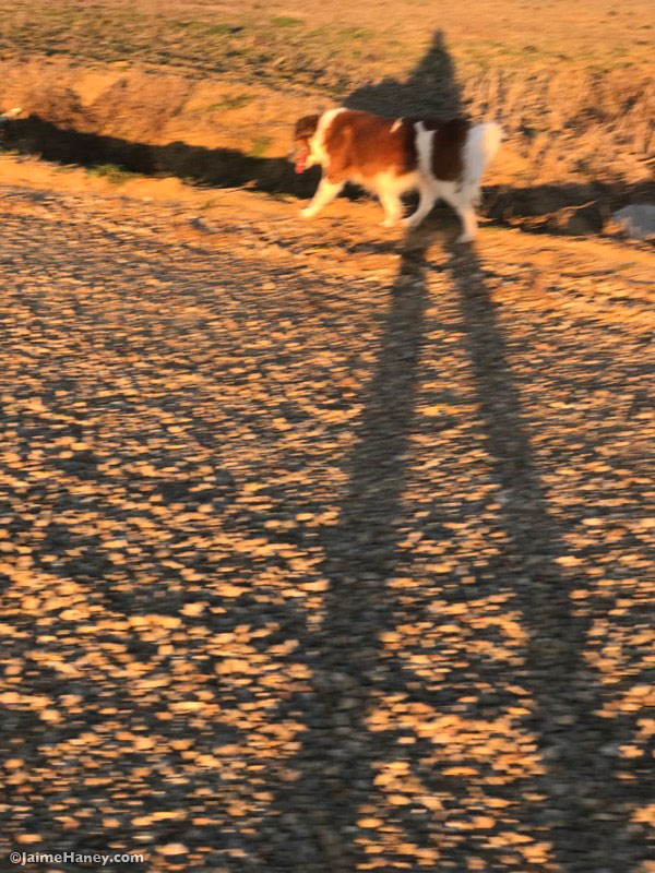 Long shadows on a winter's day walk