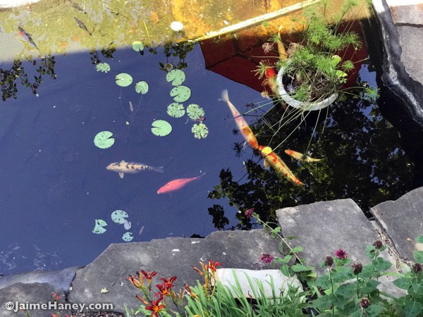 Looking down on the koi fish pond from the deck