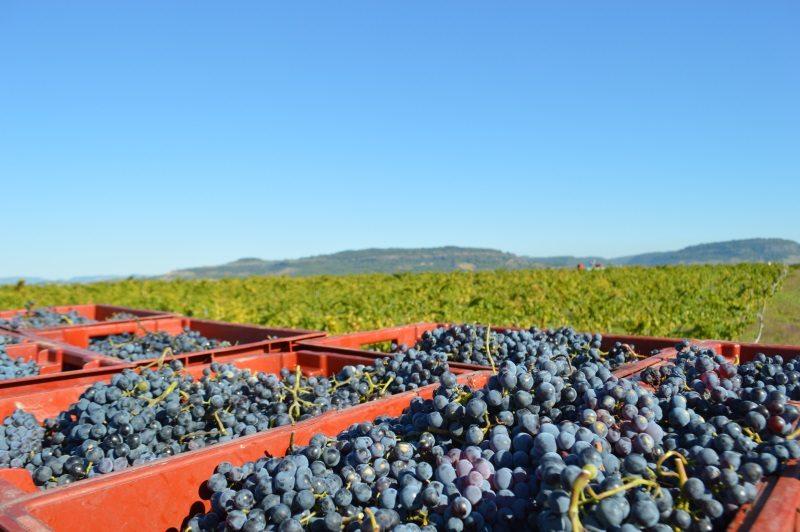 Vin bio Ardèche