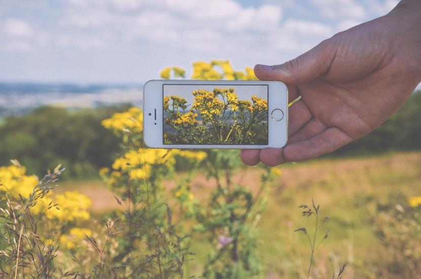 hand-apple-camera-field-large