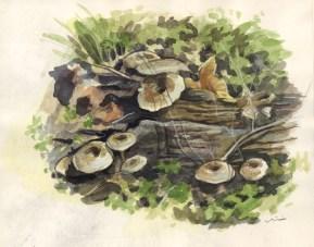 mushrooms_march15