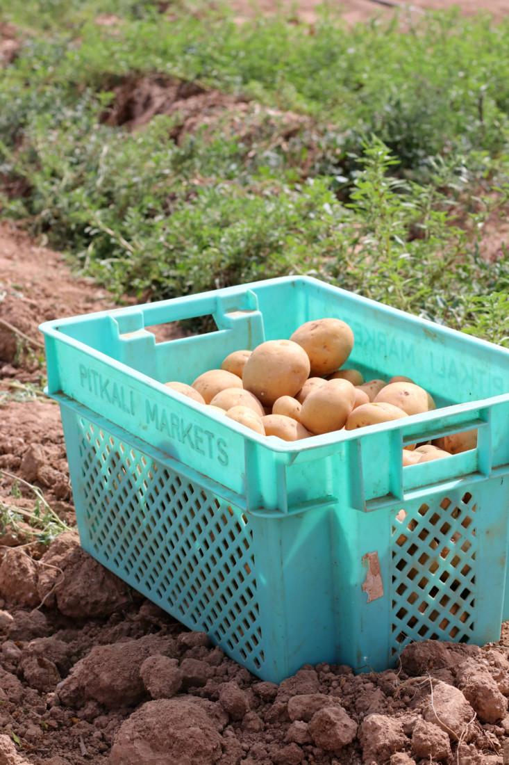 Malta Finest Potatoes www.jaimyskitchen.nl