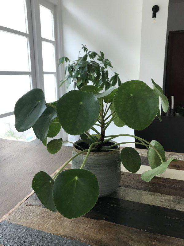 www.jaimyskitchen.nl pannenkoekenplant