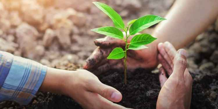 Planting new trees is present will provide a clean environment to the coming generations