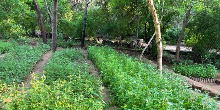 Door to Door Medicine Scheme Medicinal plants reached twenty two and a half lakh families.