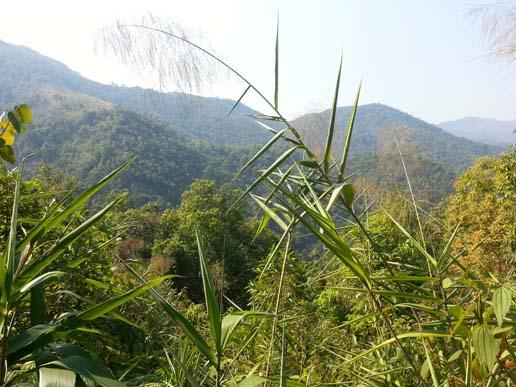 Forêt tropicale (Photos d'Axel & Sara)