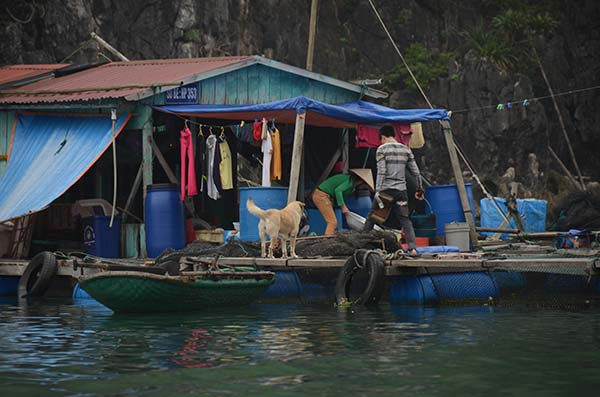 La baie d'Along - Cat Ba - Vietnam