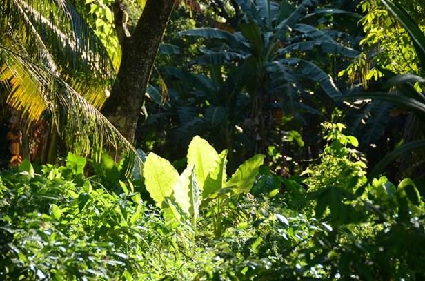 L'île de Camiguin - Philippines - La lumière de la jungle