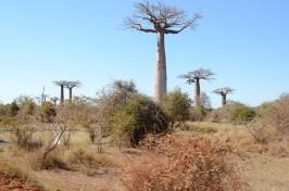 Manja et Morondava - Madagascar - tour du monde - jaiunouverture
