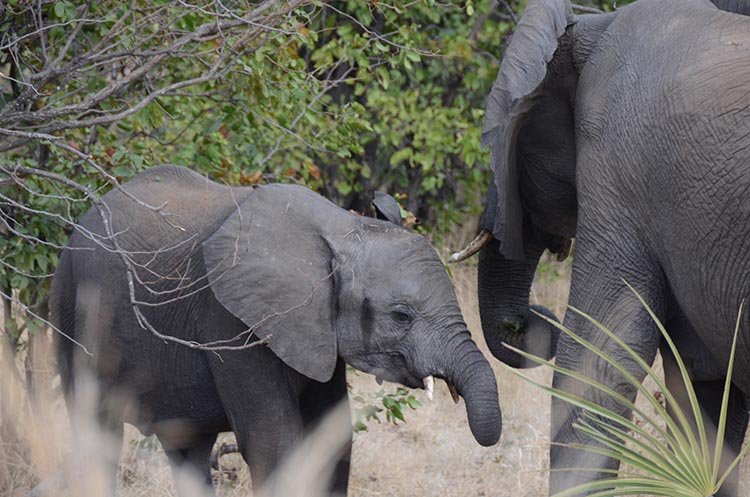 Le parc Kruger en famille - Jaiuneouverture (28)