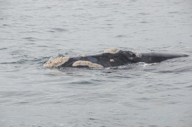 baleines d'Hermanus - afrique du sud - tour du monde - jaiuneouverture