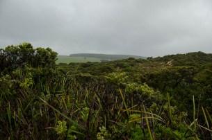 Cape Bridgewater (1)