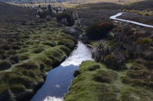 Le Cradle Mountain en Tasmanie - Jaiuneouverture - Tour du Monde (54)