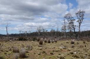 Le Cradle Mountain en Tasmanie - Jaiuneouverture - Tour du Monde (64)