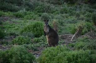 Nelson - Australie (1)
