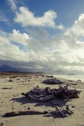 La jungle et les plages de la West Coast - Nouvelle Zélande - Jaiuneouverture Tour du Monde (2) copy