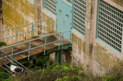 Madame Pipi - Alcatraz- San Francisco