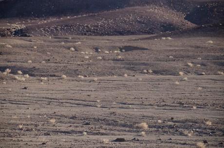 Quelques plantes dans la pierre - Death Valley - USA