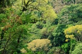Juayua au El Salvador (9)