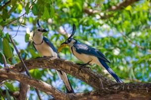 L'île d'Ometepe au Nicaragua (11)