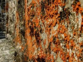 Palenque au Mexique (13)