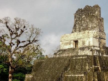 Tikal au Guatemala (7)