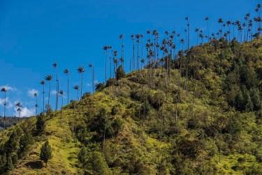 Salento - Colombie (4)