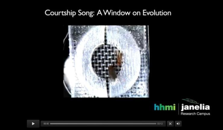 Courtship song