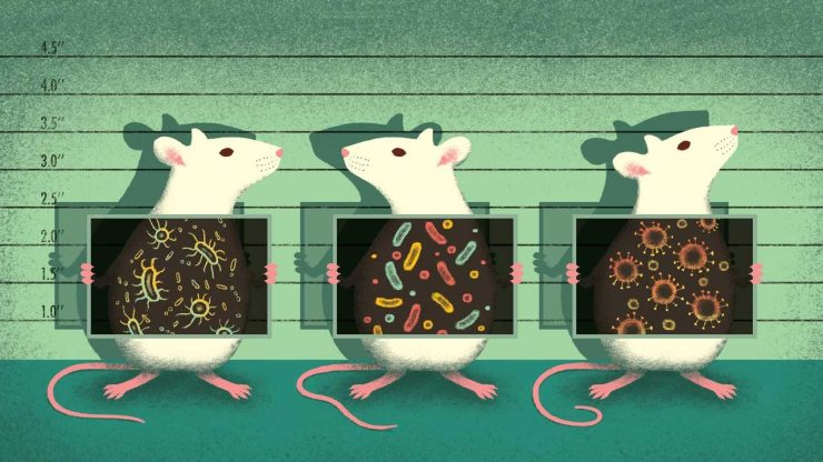 mouse_microbes