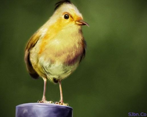 Natural And Real Yellow Angry Bird
