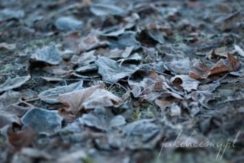 oszronione liście park krk