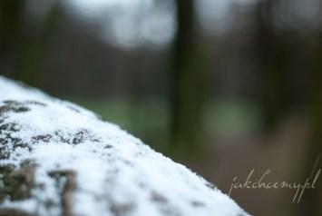 śnieg na korze drzewa pierwszy krk