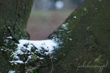 śnieg pierwszy parkowe drzewo krk