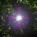 Olśnienie, Słońce przez liście