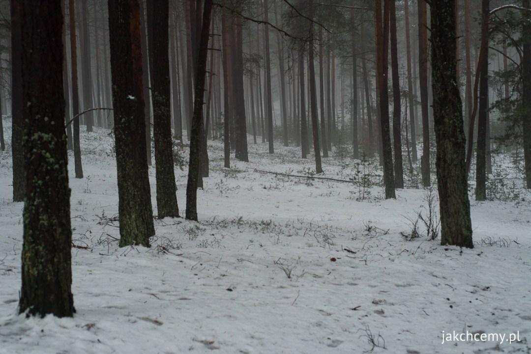 śnieg, las, ferie 12