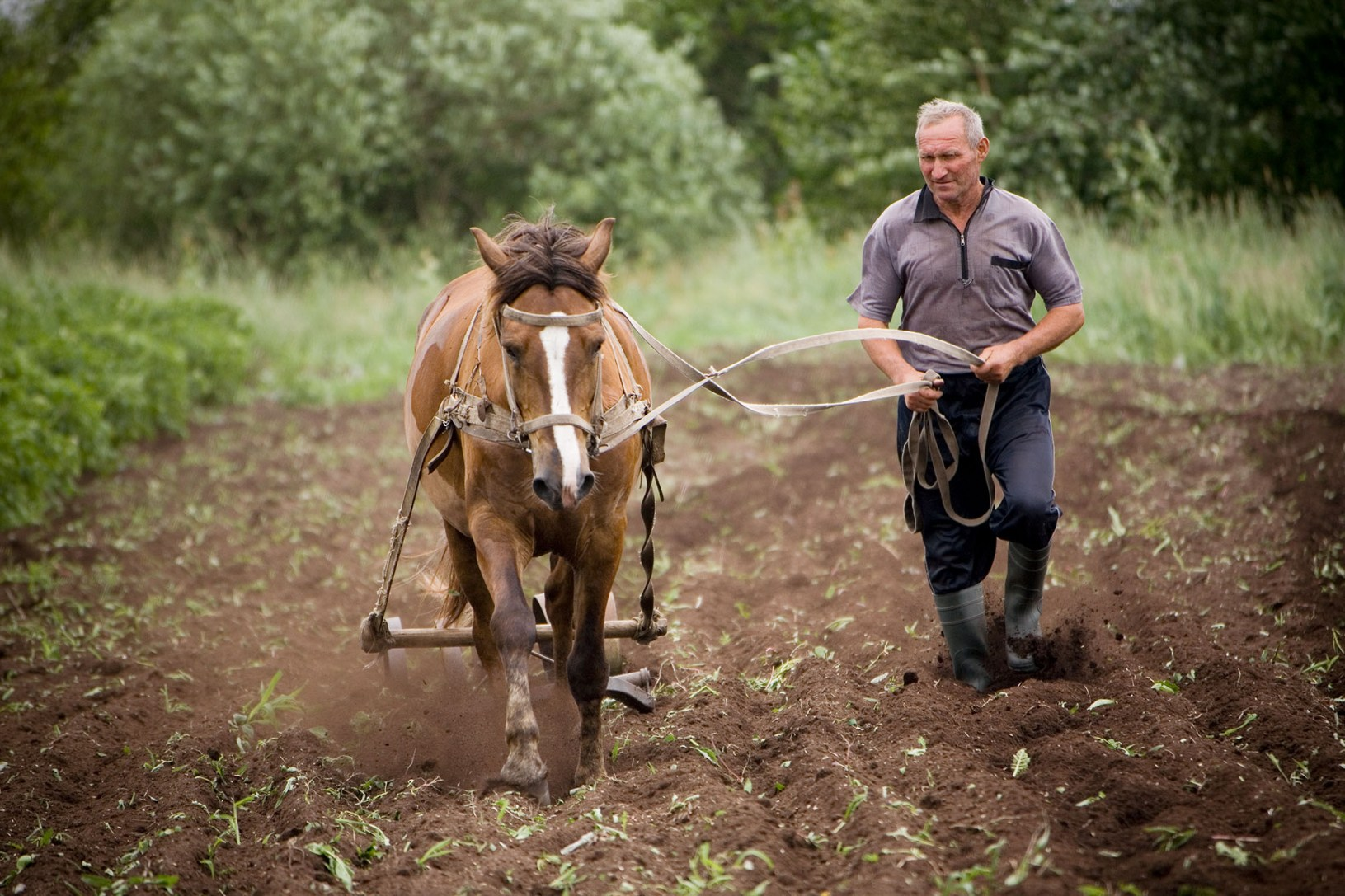 A farmer and his horse plow the fields Pekhy Village, Ukraine.