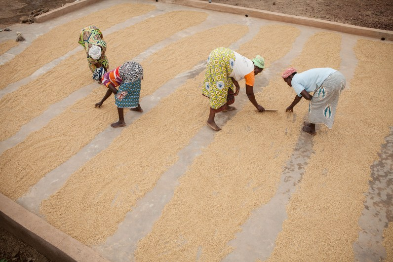 Rice is sorted and dried at a women's cooperative in Sourou Province, Burkina Faso.