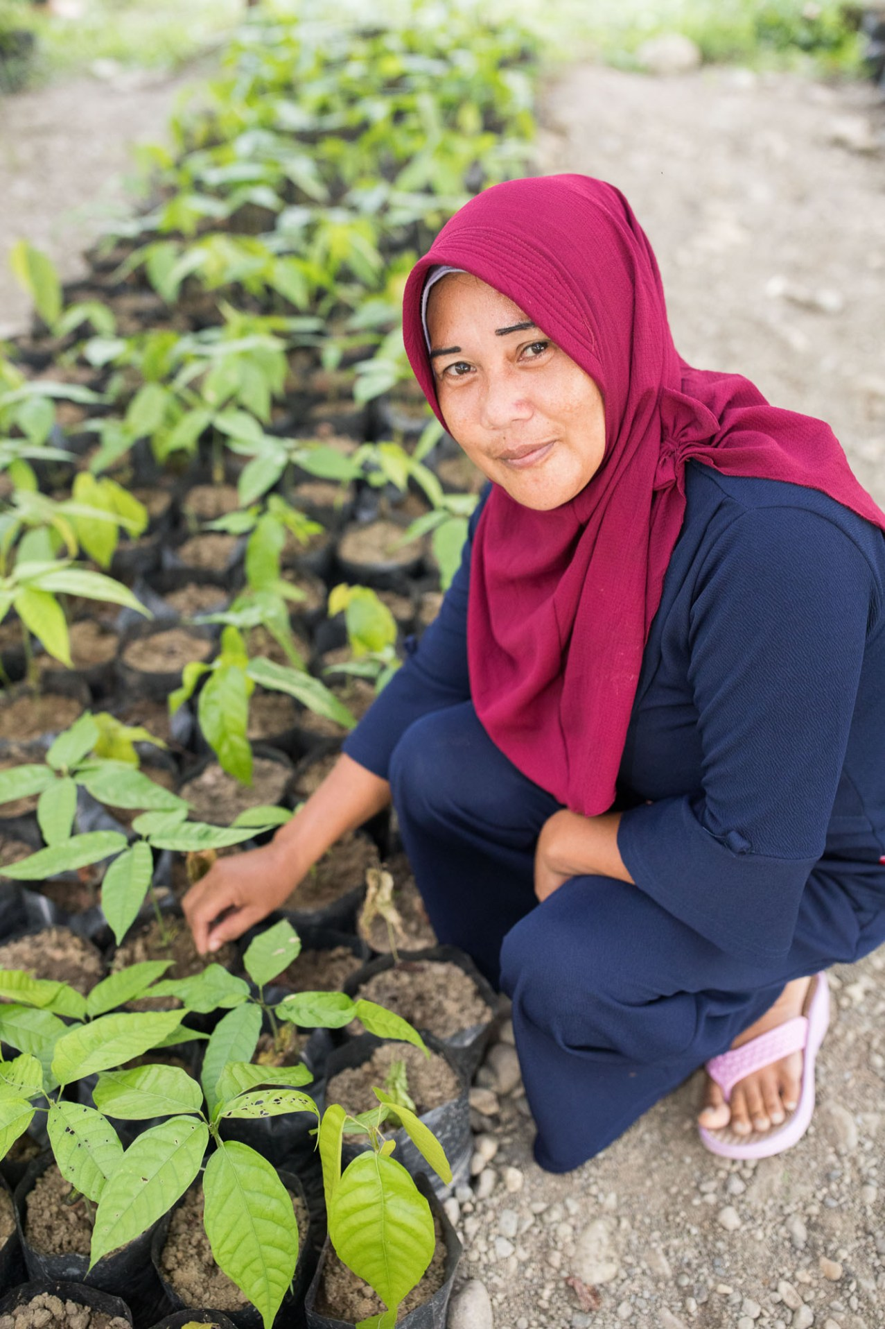 A small farmer works in a cocoa seedling nursery and training center in Mamuju, Indonesia.