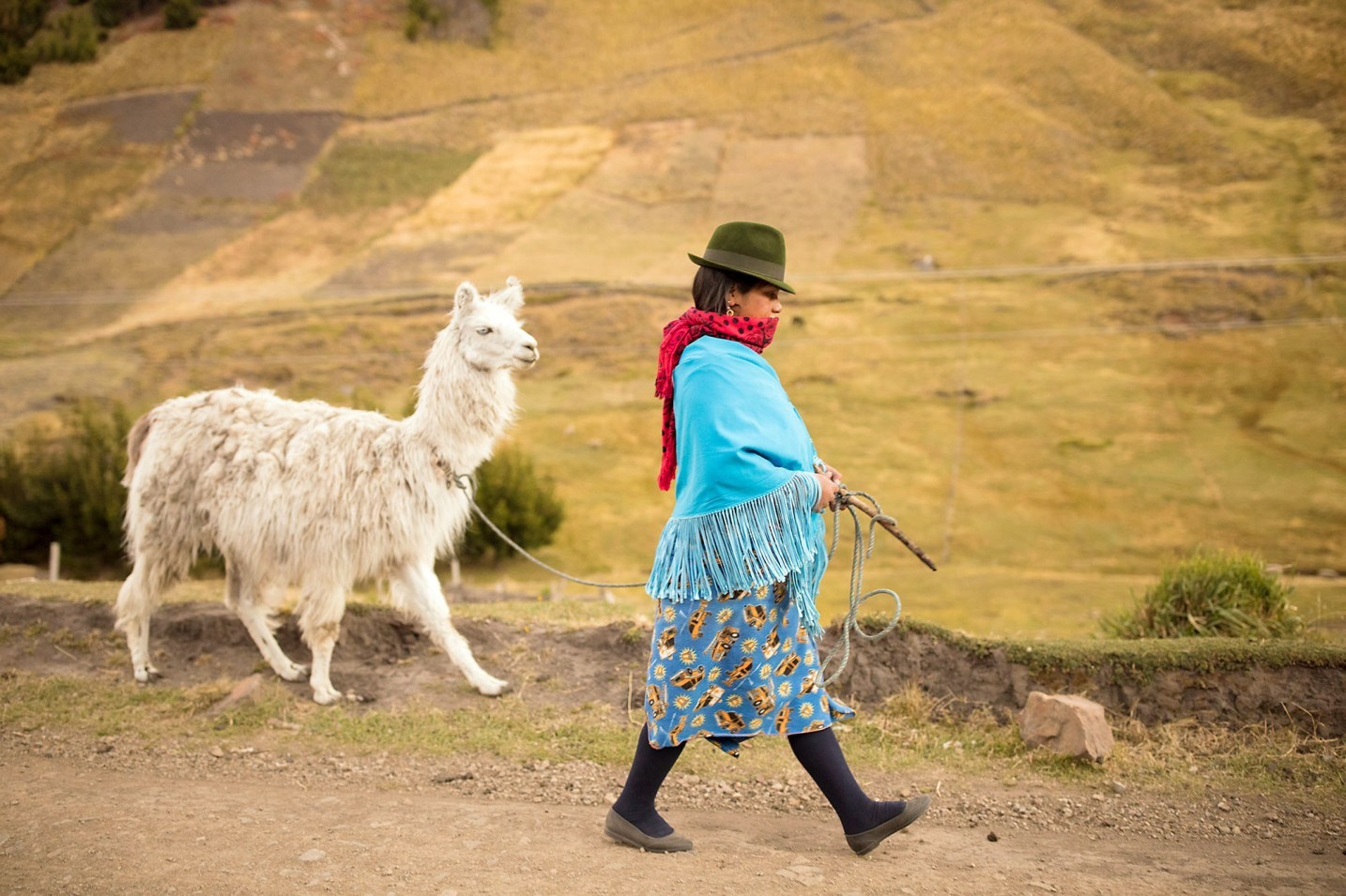 A woman travels down a village road with her llama in Cotopaxi Province, Ecuador.