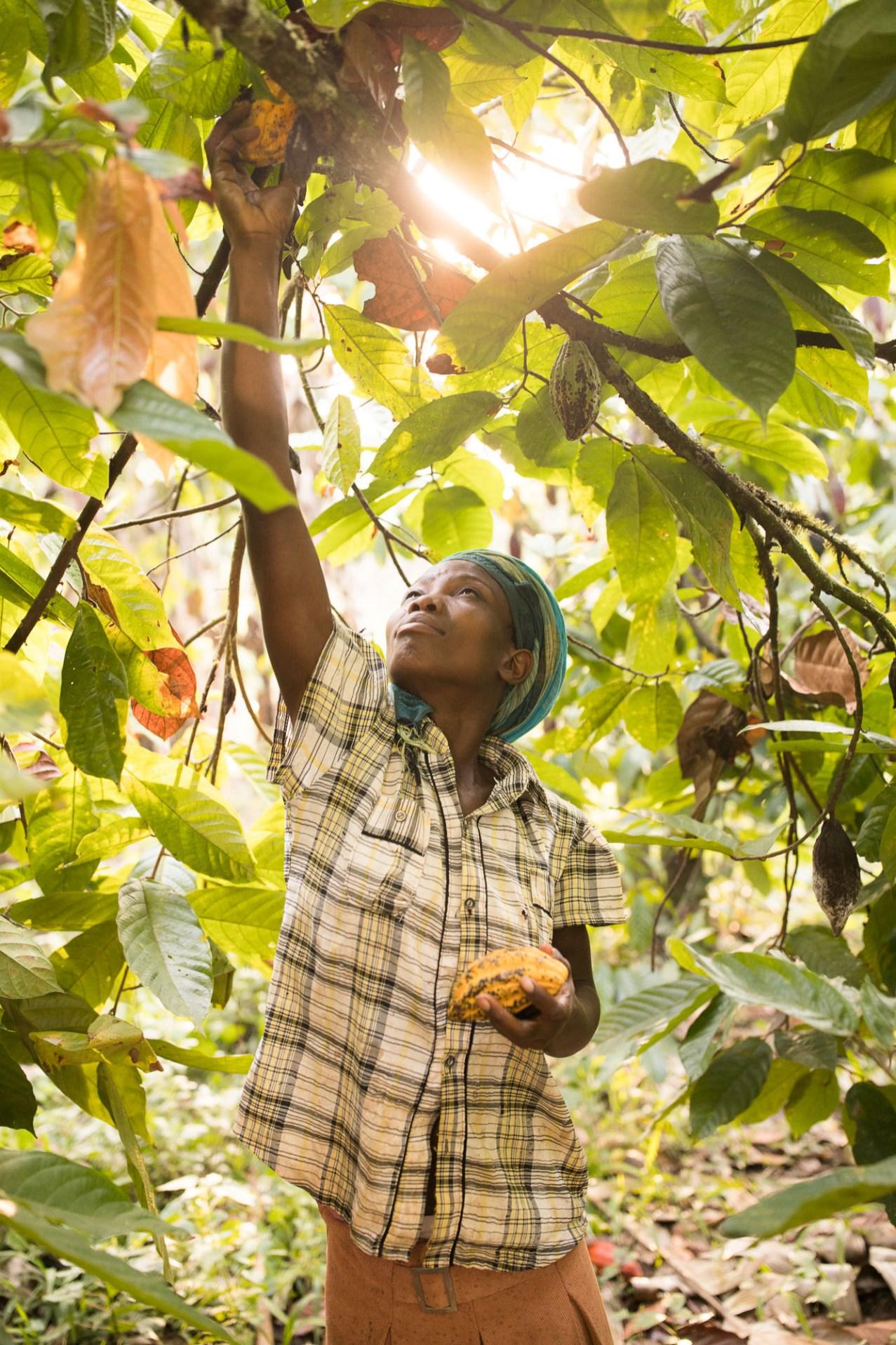 Naigaga Farida picks cocoa bean pods in Mukono District, Uganda.