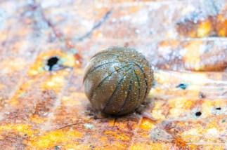 bug pill bug ball
