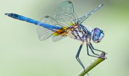 fast, dragonfly