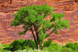 common trees