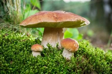 animal, fungus, mushroom
